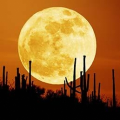 grande-luna-258.jpg
