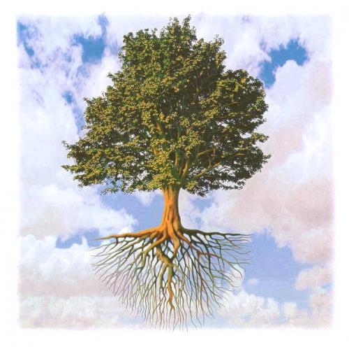 albero%20radici.jpg