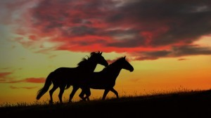 426975__horses-in-the-sunset_p